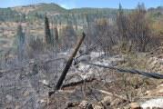 Καλύτερη εικόνα σε Ζάκυνθο, Κάλαμο, Ηλεία: Χωρίς ενεργά μέτωπα οι φωτιές