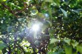 «Τρελός» καιρός σήμερα -Κρύο στη βόρεια Ελλάδα, ζέστη στα νότια
